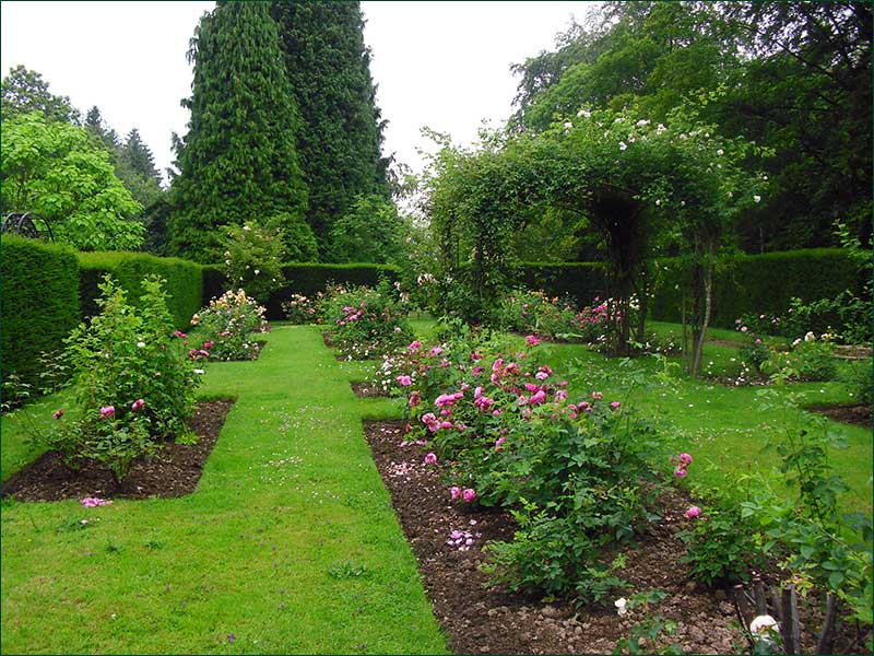 Rose Garden In Hascombe Near Godalming, Surrey