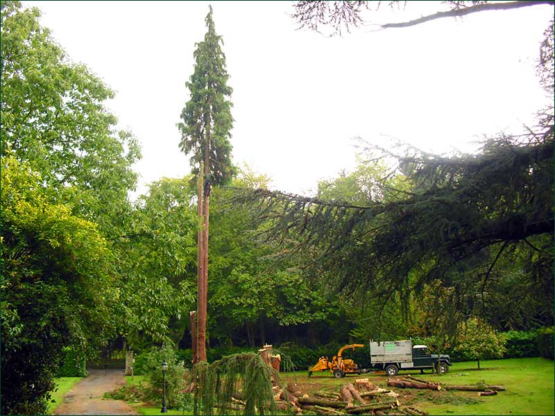 Tree Work, Hascombe, Godalming, Surrey
