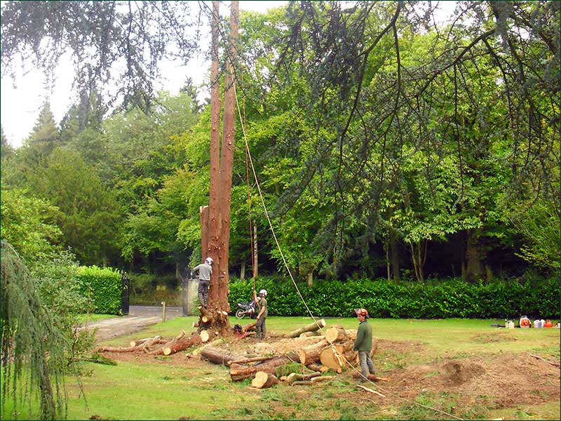 Tree Work, Hascombe, Godalming, Surrey