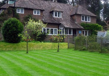 Lawn Care – Pamela Rozario Garden Maintenance