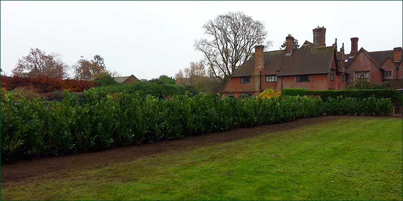 Take out and replace with a new hedge