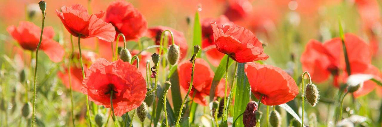 Garden Maintenance Services - Midhurst, West Sussex